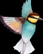 vogel-bienenfresser.png